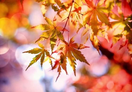 12.10.19: Jahreszeitensingen Herbst